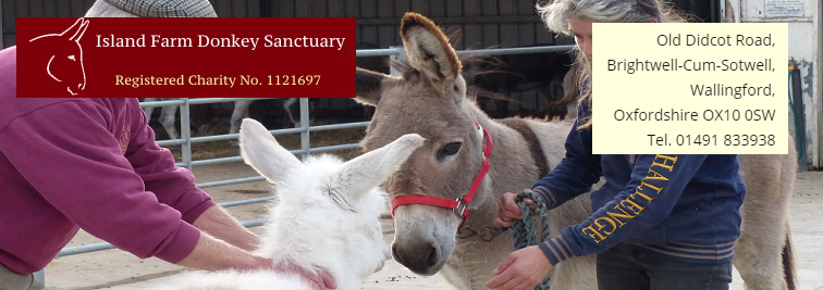 Farm Donkey Sanctuary