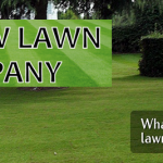 New Lawn Co