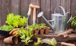 Gardening Services Abingdon